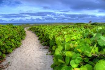 walkway-to-ocean-24x16-256pi-hdr
