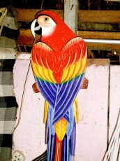 Painted Parrot in