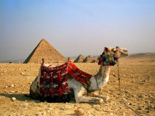 Camel Rests - Great Pyramid of Giza