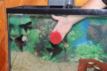 FishTank14