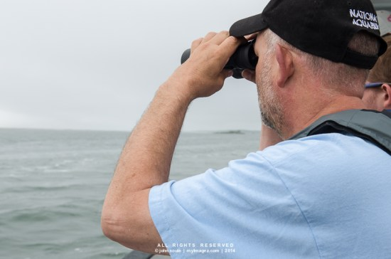 Brent Whitaker from the National Aquarium searches for dolphins