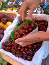 Selecting the cherries @CelinaLafuenteDeLavotha