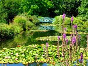 Les Jardins d'Eau, France, botanical gardens, water lilies, Saint Rome