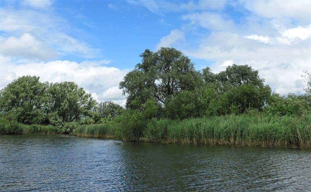 De Biesbosch, national park, the Netherlands, wetland, natural reserve