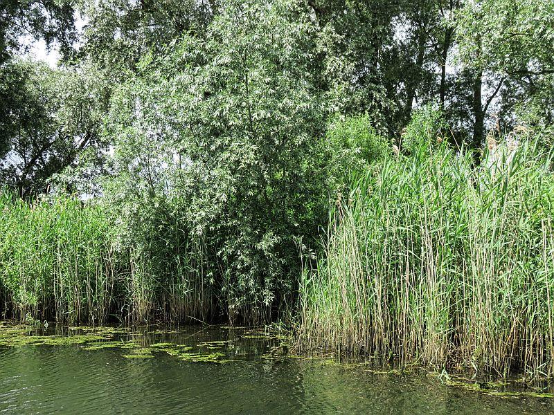 De Biesbosch, the Netherlands, wetland, natural reserve, national park