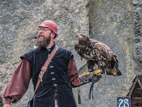 Birds of prey show at the Bouillon Castle, Belgium - Wallonia