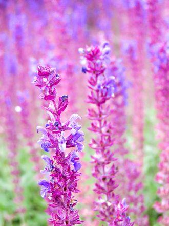 Flowers Garden of Appeltern
