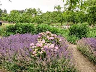 Purple flowers Gardens of Appeltern