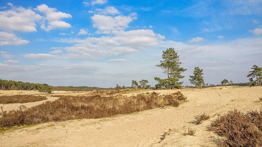 drifting sand area with some heath bushes and green trees at the background, Dunes of Loon and Drunen National Park