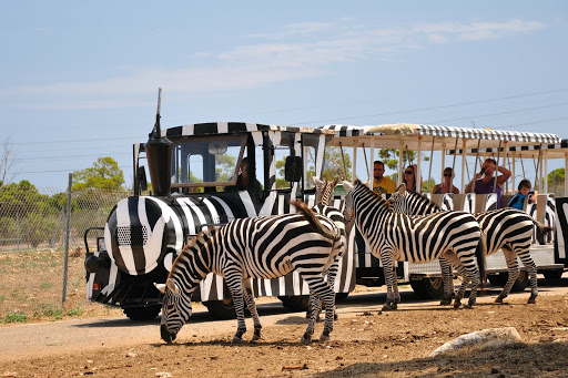 Safari Zoo , il parco faunistico di Maiorca