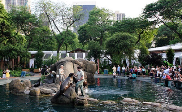 Perche visitare il Central Park Zoo di New York?