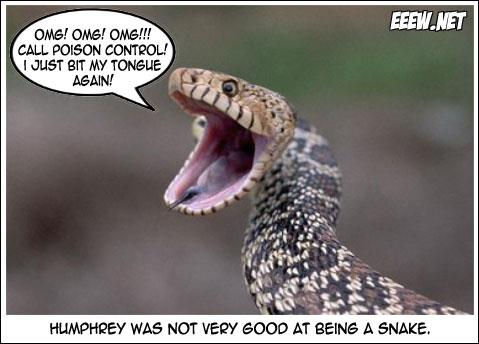 Image result for snake bite