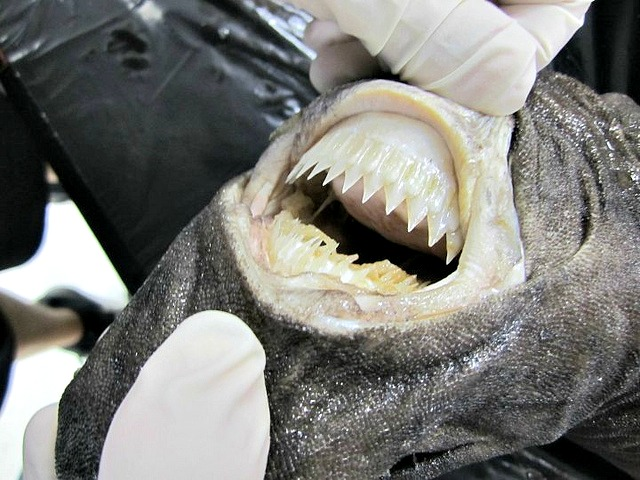 10 Interesting Facts About Cookiecutter Sharks  Fun Facts You Need to Know