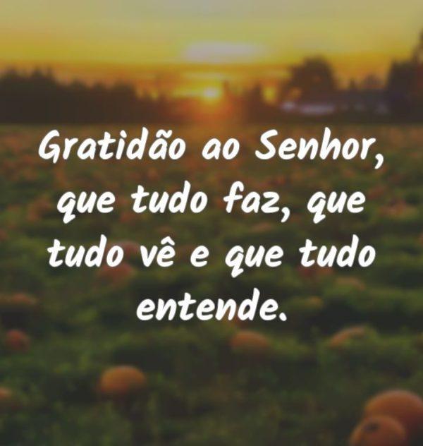 Gratidão ao senhor
