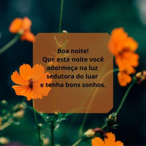 Mensagem de boa noite perfeita com flores