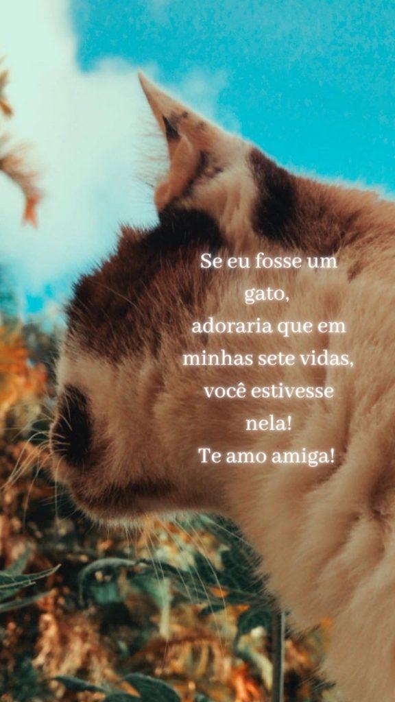 mensagem linda para enviar a uma amiga do coração, muito fofa sobre gatos.