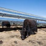 Cortando el césped en las granjas solares de Apple