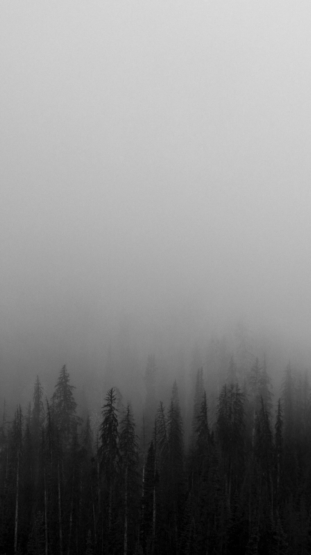 Download Sad Wallpapers With Beautiful Quotes Black And White Mist Forests Wallpaper Iphone Wallpapers