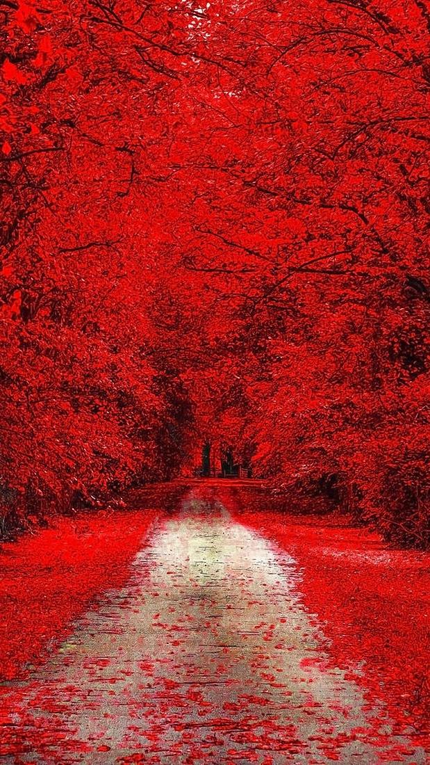 Animal Anime Girls Cute Wallpaper Red Trees Nature Iphone Wallpaper Iphone Wallpapers
