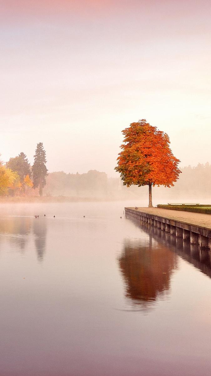 Trees Autumn Nature Landscape Iphone Wallpaper Iphone