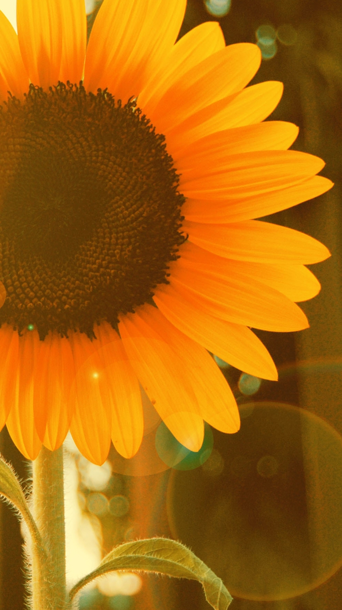 Wallpaper For Phones Fall Sunflower Near Window Iphone Wallpaper Iphone Wallpapers