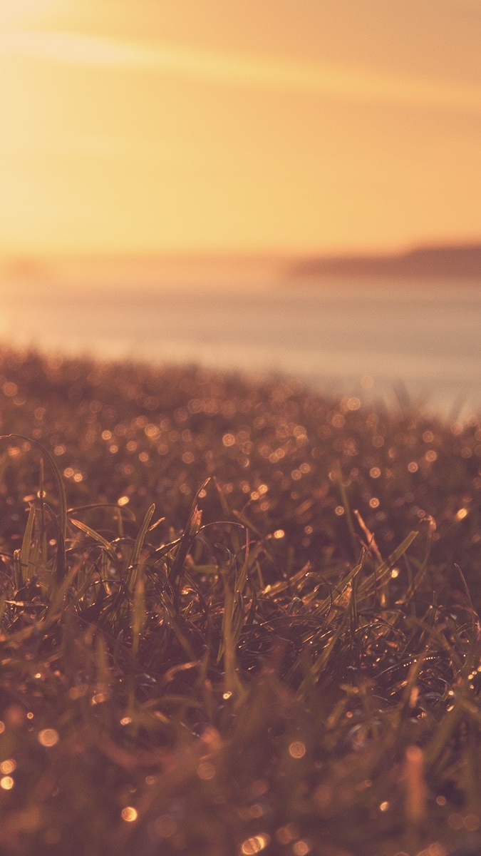 Cute Anime Wallpaper For Phone Sunset View Wet Grass Plants Iphone Wallpaper Iphone