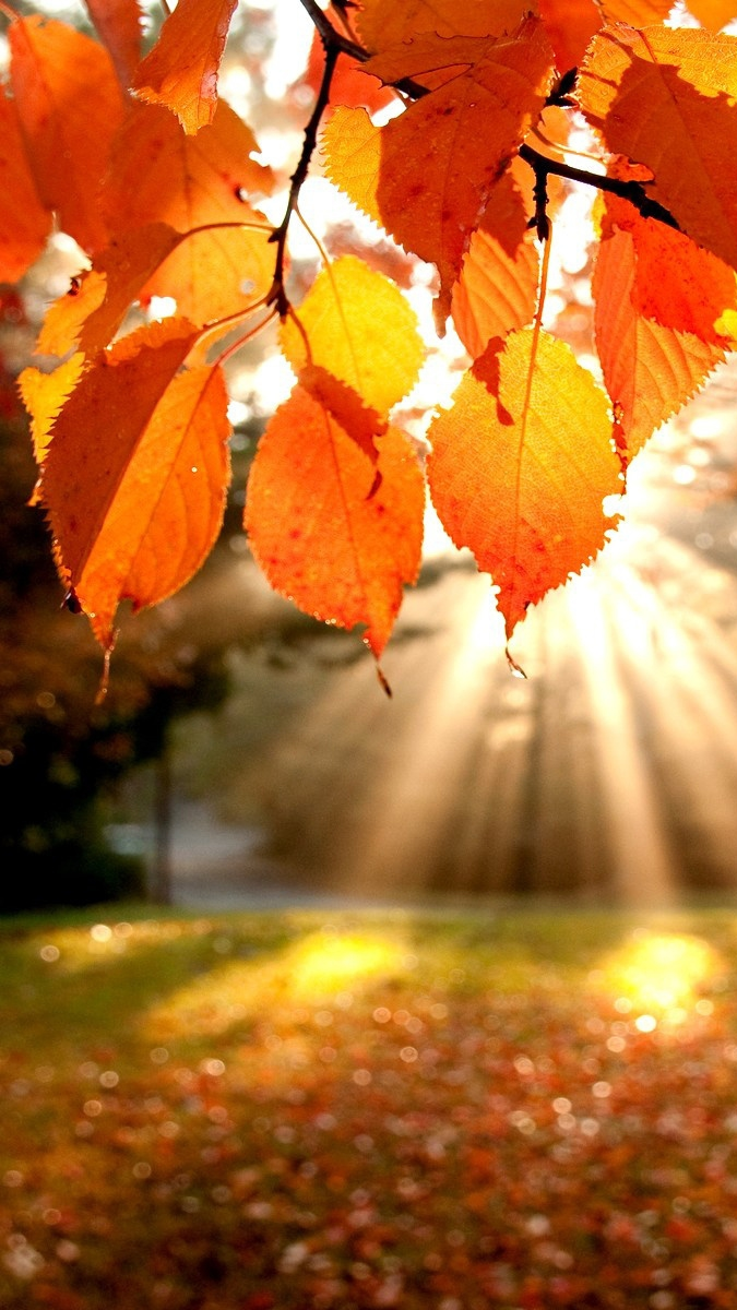 Computer Wallpaper Fall Leaves Sunshine From Leaves Autumun Iphone Wallpaper Iphone