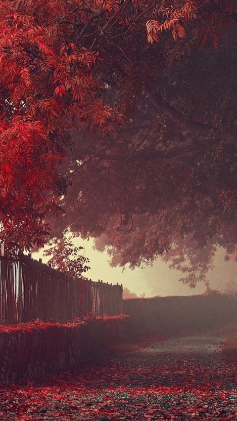 Dark Quotes Wallpaper Phone Amazing Autumn Wallpaper Red Leaf Trees Iphone Wallpaper