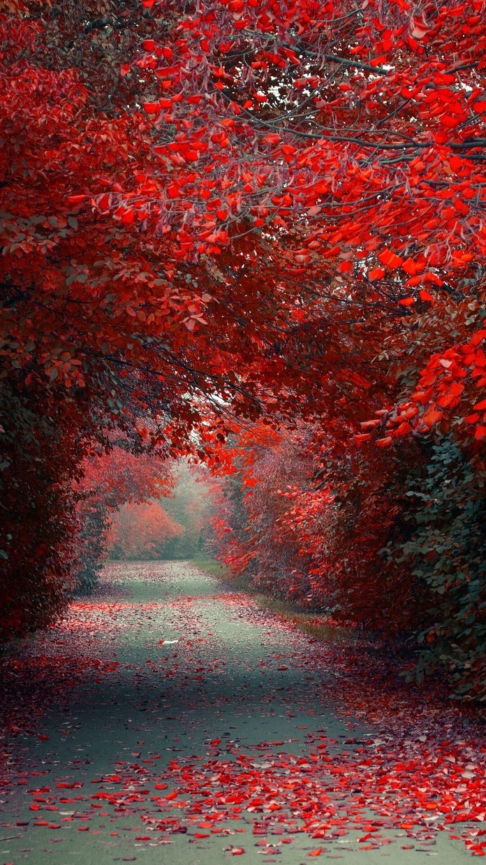 Wallpaper For Phones Fall Autumn Red Leaves Road Wallpaper Iphone Wallpaper Iphone