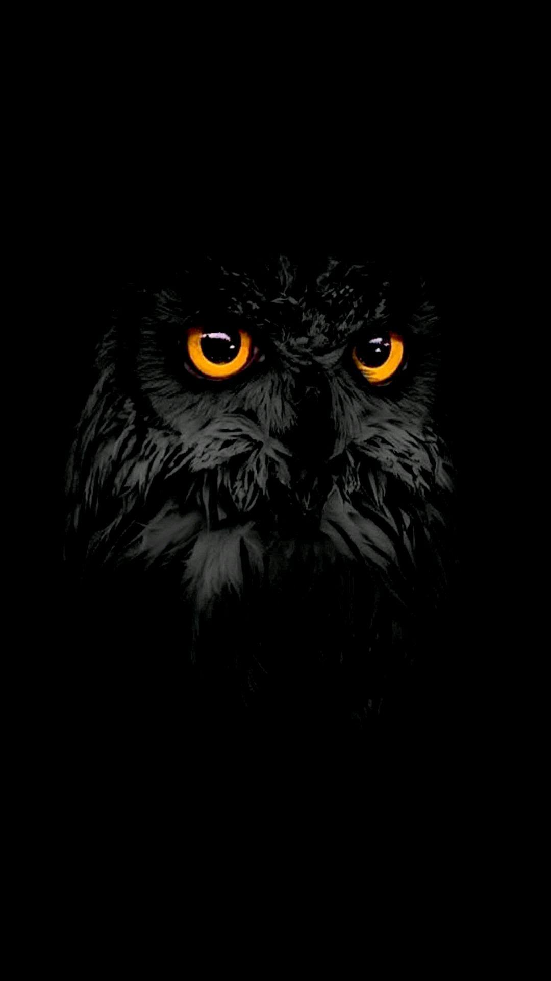 Halloween Owl Wallpaper Hd