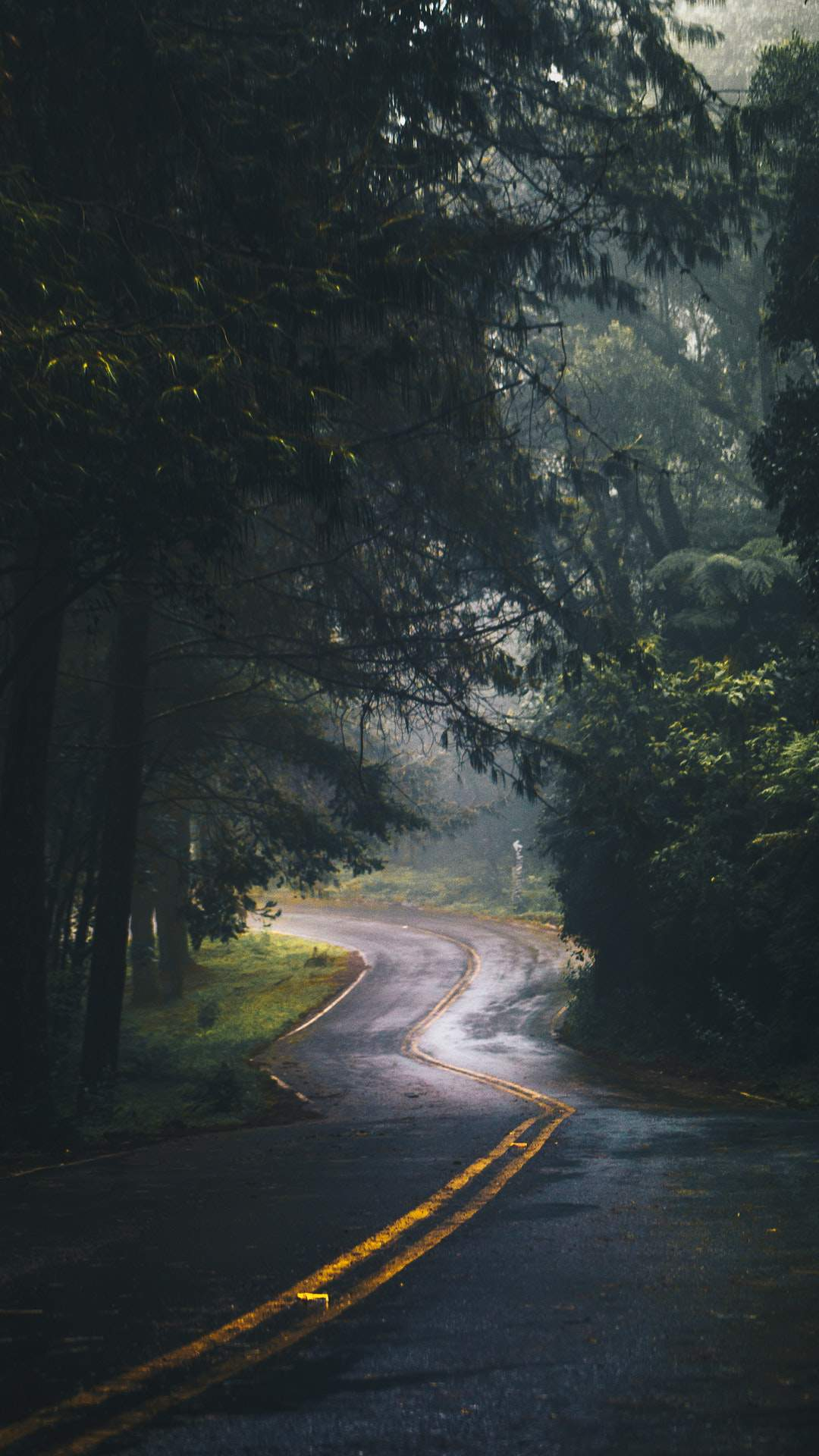 Wallpaper For Phones Fall Nature Road Green Forest Trees Iphone Wallpaper Iphone