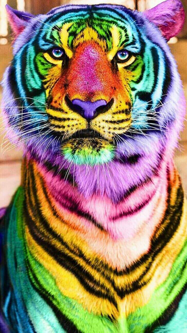 Cute Sunset Wallpaper Colorful Tiger Iphone Wallpaper Iphone Wallpapers