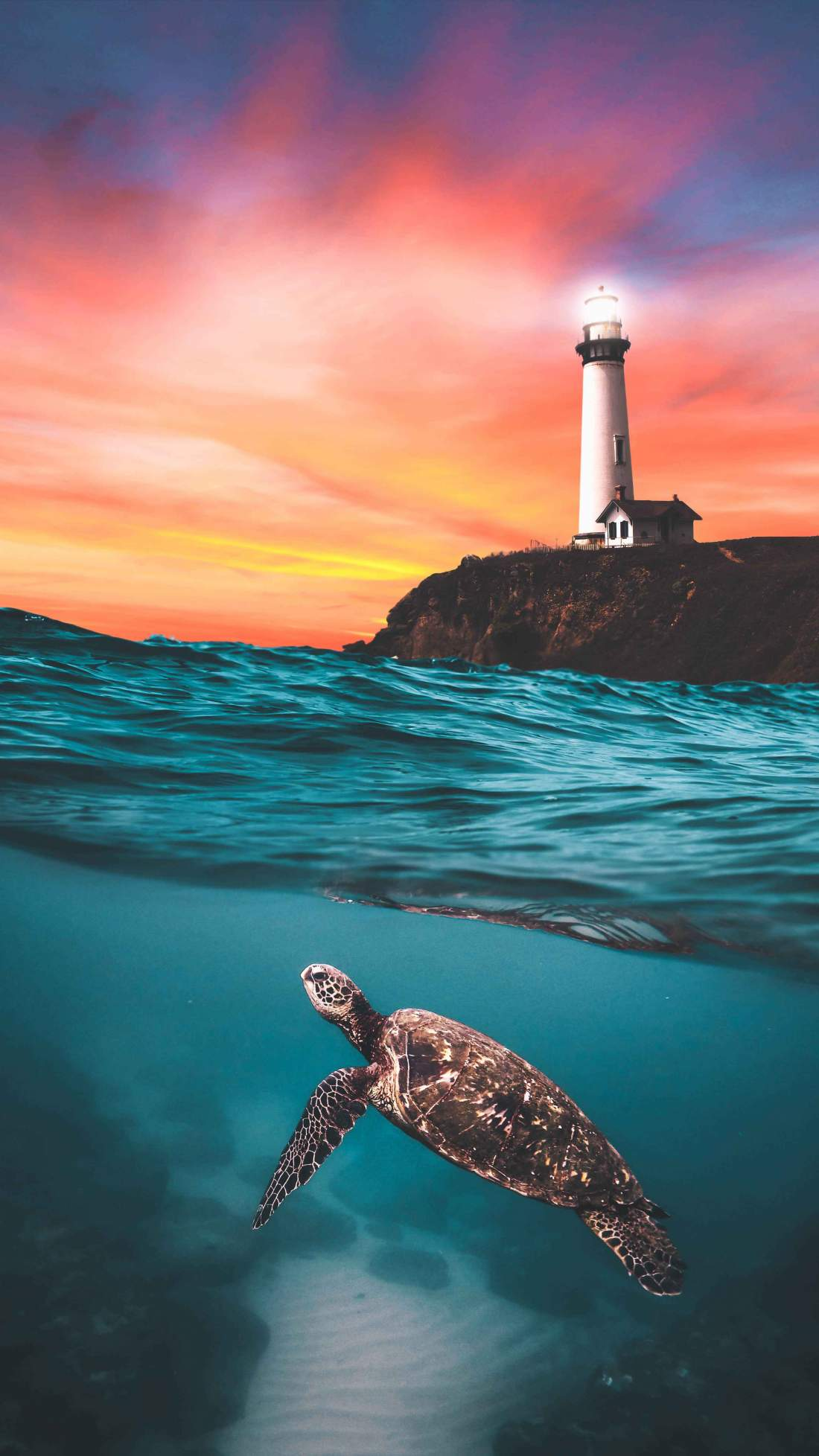 Animal Anime Girls Cute Wallpaper Turtle And The Lighthouse Iphone Wallpaper Iphone Wallpapers