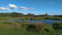 Looking over the wetlands. Sometimes there are black swans here. Dogs aren't allowed to swim here.