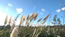 One of the vistas on the walk, but it has become overgrown with toitoi.
