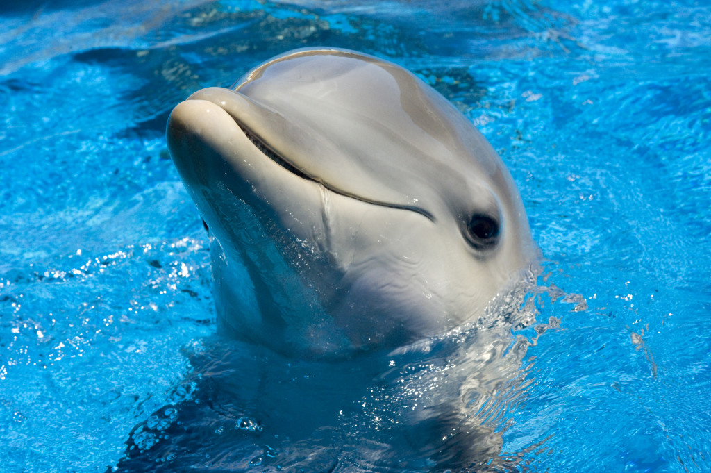 Cute Baby Dolphin Wallpaper Dolphin Cute Wallpaper Hd Wallpaper Hd Desktop High