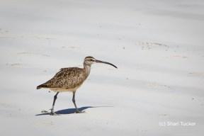 Bird at Playa Tortuga