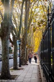 Tigre City Streets
