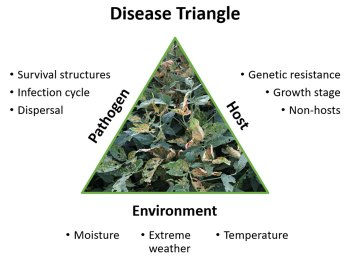 diagram showing the disease triangle