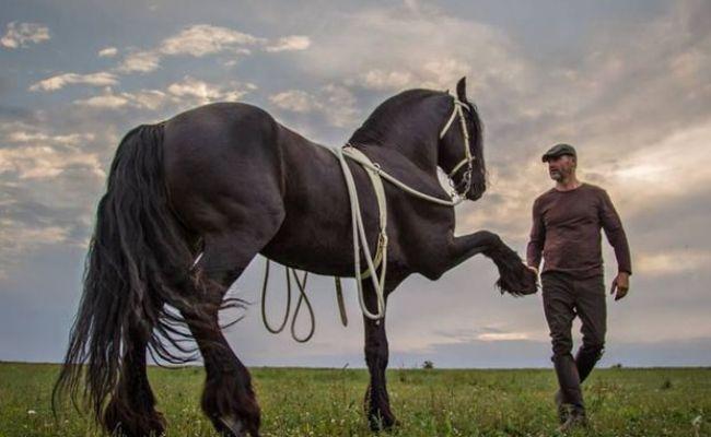 Tip Na Víkend Kaskadéri Na Koňoch Pricválajú Za Nitranmi