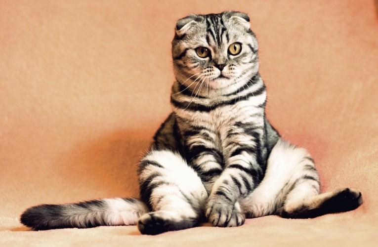 Suka dengan Memelihara hewan? Inilah 5 Cara Merawat Kucing