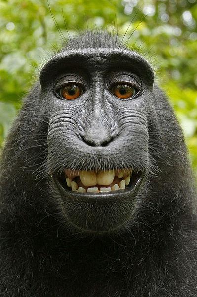monkeyselfie5
