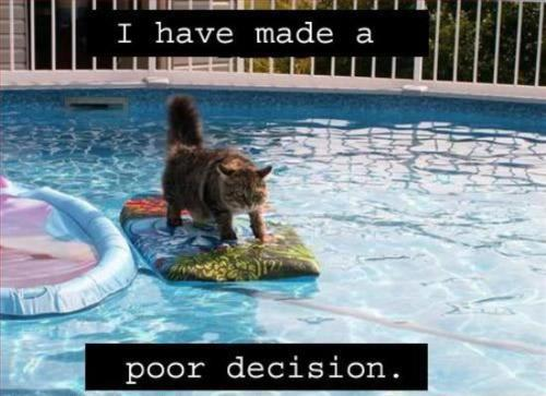 Cat in pool - I have made a poor decision