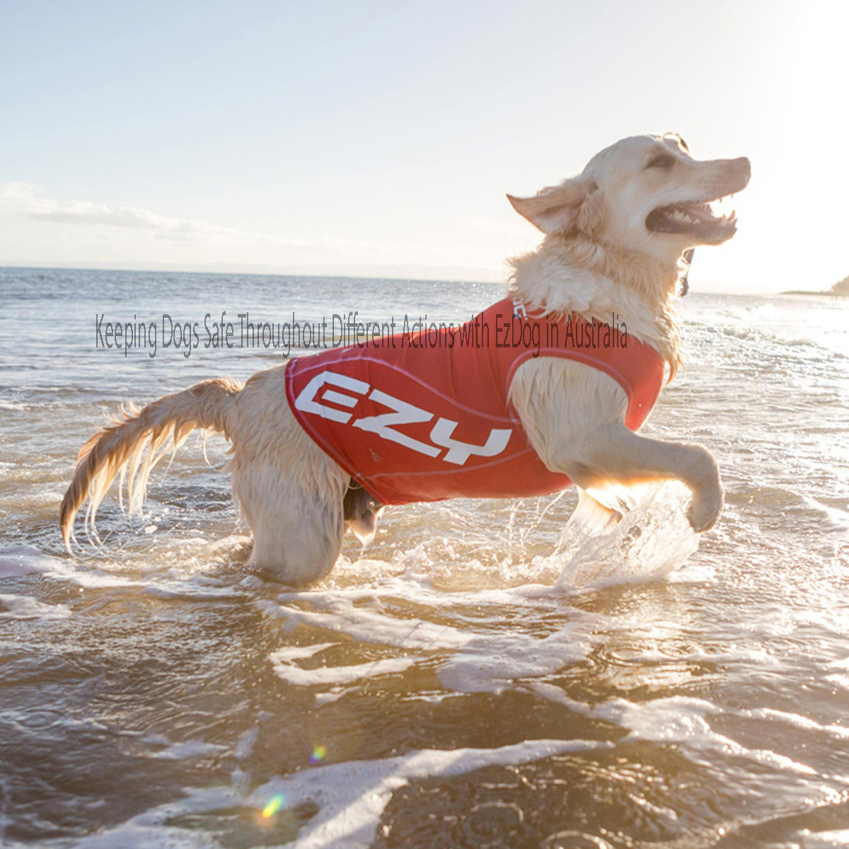Keeping Dogs Safe Throughout Different Actions with EzDog in Australia