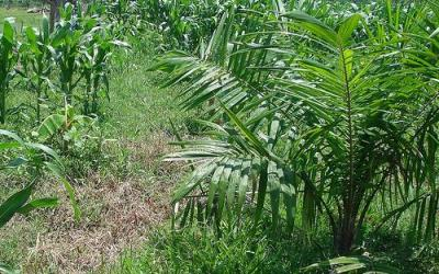 Big Agriculture's Latin American Exploits