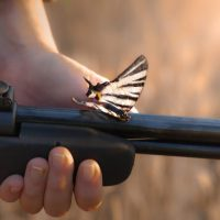 gun-butterfly-peace-war