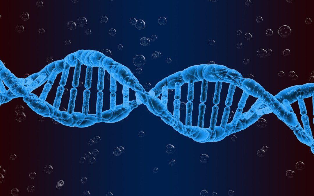 Can Inequality Be Hardwired into Our DNA?