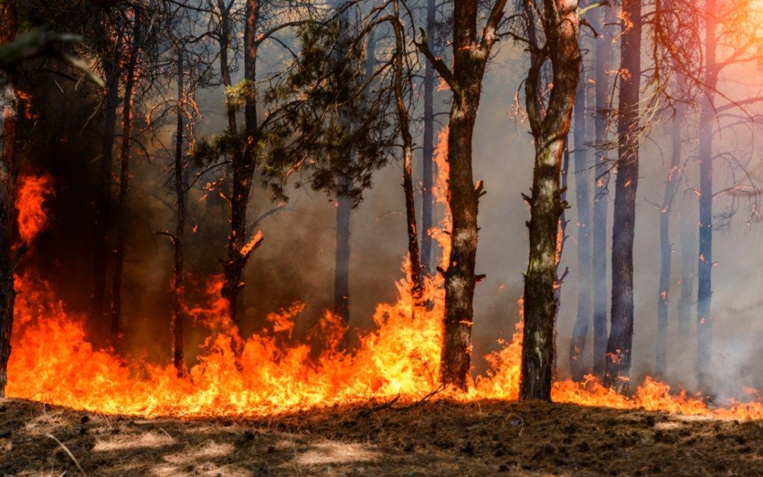 Activists Follow the Money Fueling Amazon Fires