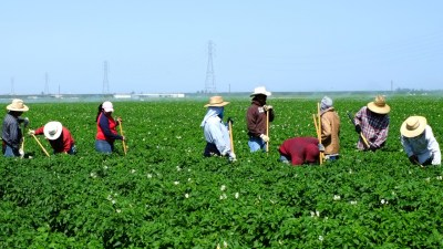 farm laborers working in th fields in California