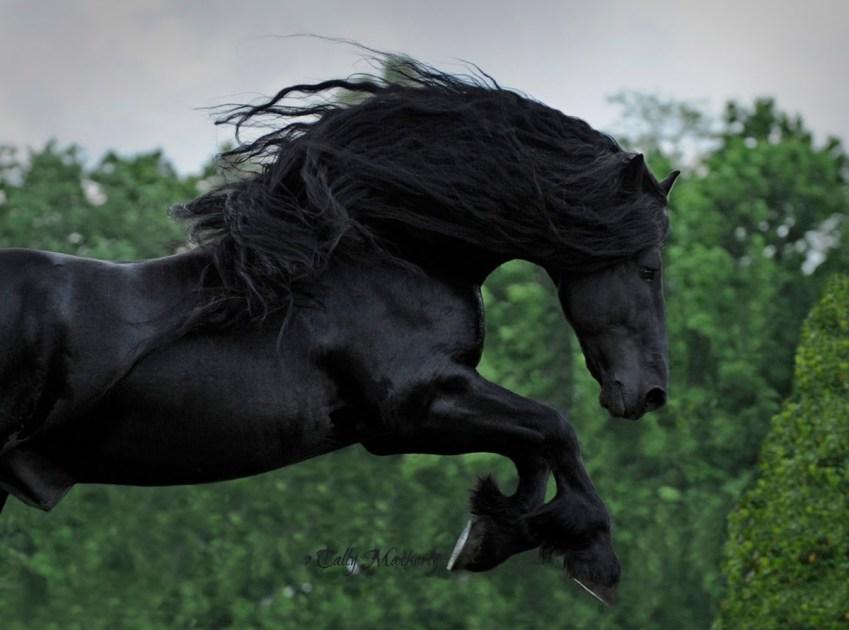 Frederik il Grande  il cavallo pi bello del mondo  superEva